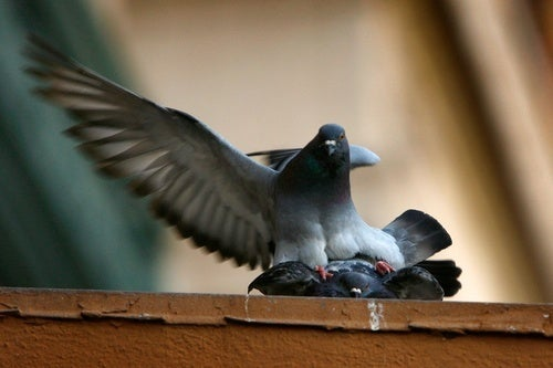 Either Pigeons Are Brilliant or Art Critics Are Idiots