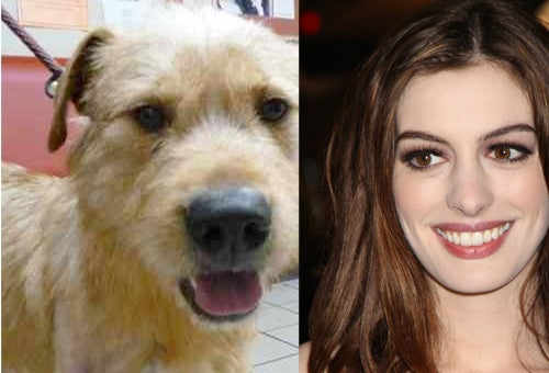 Anne Hathaway Must Adopt This Dog Named Chuck