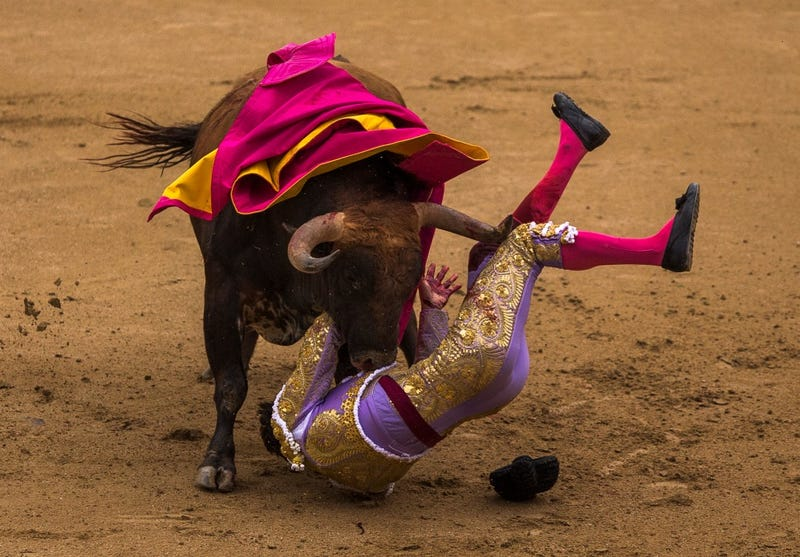 Bulls Win Bullfighting Festival, Remaining Events Canceled