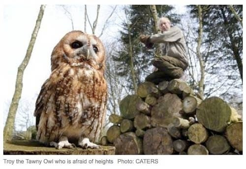 Owl Won't Fly Because He's Scared Of Heights