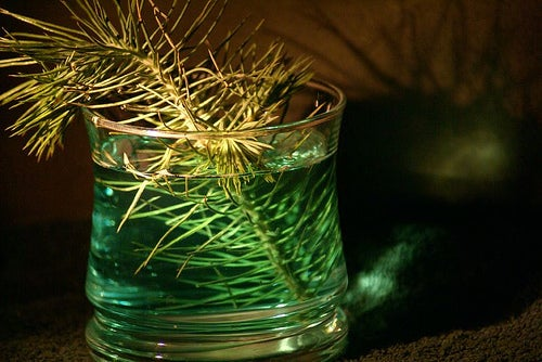 Make Your Own Toxin-Free Insect Repellent with a Splash of Vodka