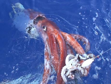 Kraken of the Sea and of Our Trembling Fear