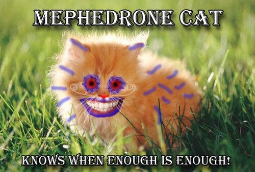 "Britain Tries to Ban Party Drug ""Meow Meow"""