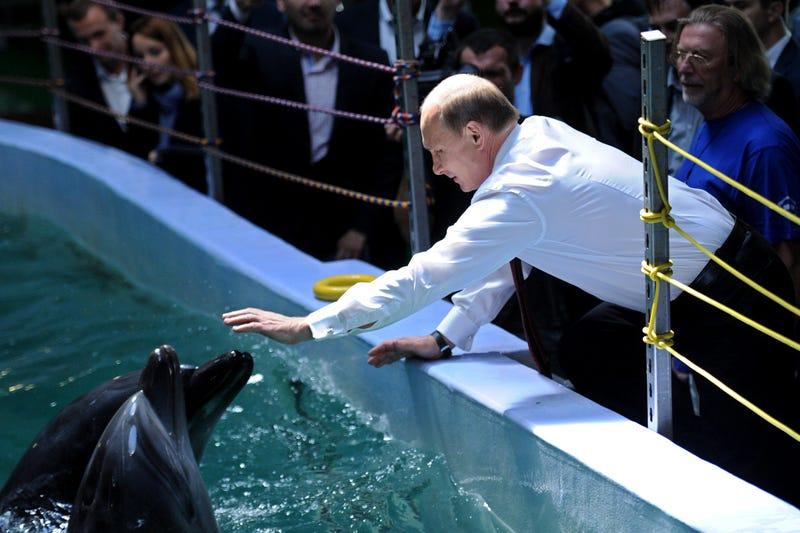 Ukraine Update #3: Putin Adopts Dolphins, Tells Kiev To Pay Up