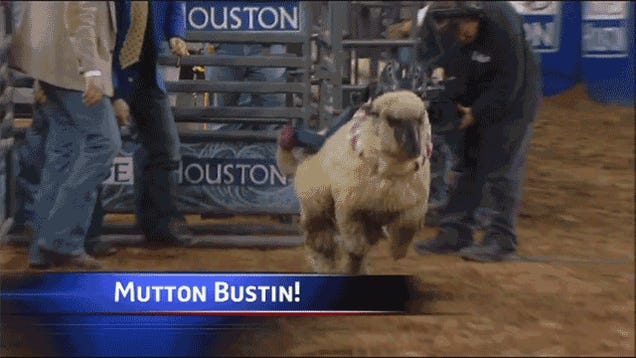 Five-Year-Old Mutton Bustin' Rider Eats It