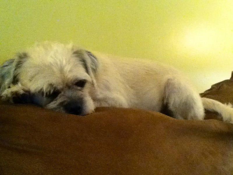 Sleepy dog is sleepy
