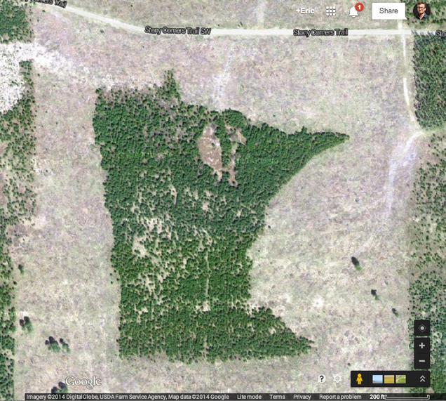 Minnesota Has A Minnesota-Shaped Forest