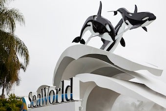 SeaWorld Fined Pennies In Wake Of Trainer's Death