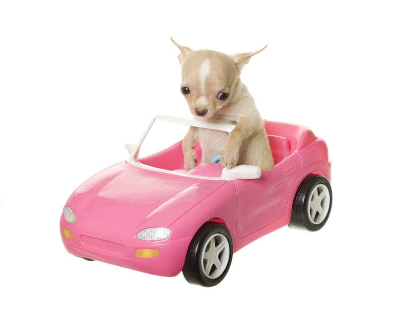 Stolen Chihuahua Returned to Porsche