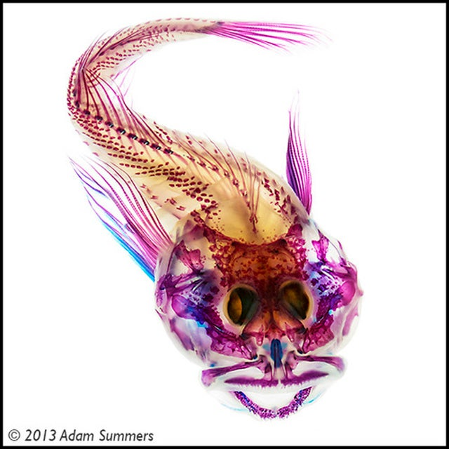 Check Out These Pigmented Fish, Like Creatures Made from Neon Lights