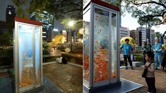 We Should Turn All Phone Booths Into Aquariums