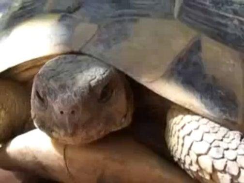 Turtles Love Their Orgasms