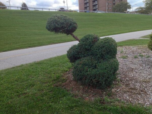 City Officials Panic After 'Vandals' Trim Bush In the Shape of a Penis