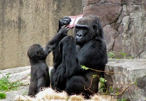 Gorilla Playing Nintendo Gallery