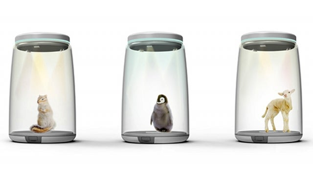 Finally, an ethical way to trap your favorite animals inside a jar