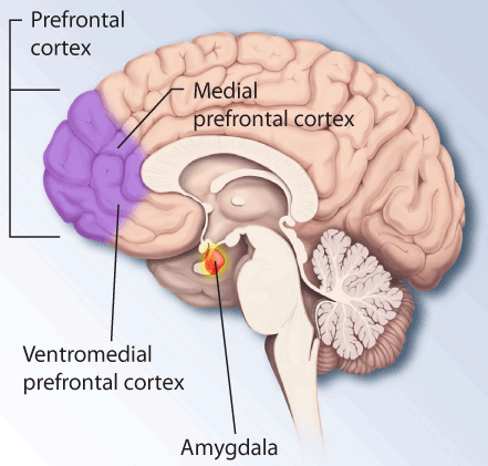 """How Does """"Valence"""" Help Your Brain Distinguish Between Good And Bad?"""