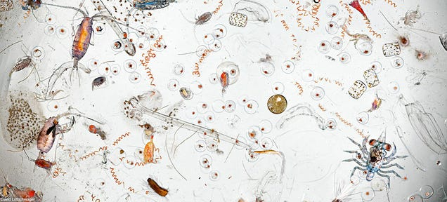 This Is What's in a Single Drop of Seawater