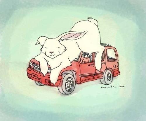 SUV Drivers, Beware Of Giant Sleeping Rabbits