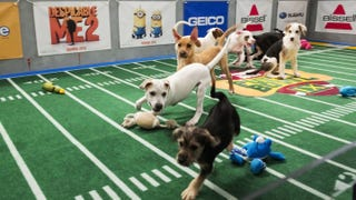 Puppy Bowl, Fish Bowl, Kitten Bowl: Counterprogramming The Super Bowl