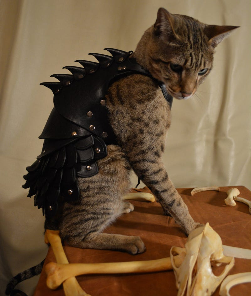 No Cat Is Complete Without A Set Of Leather Battle Armor