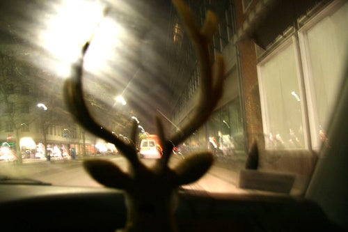 Five-Point Frenzy: When Deer Meets Car