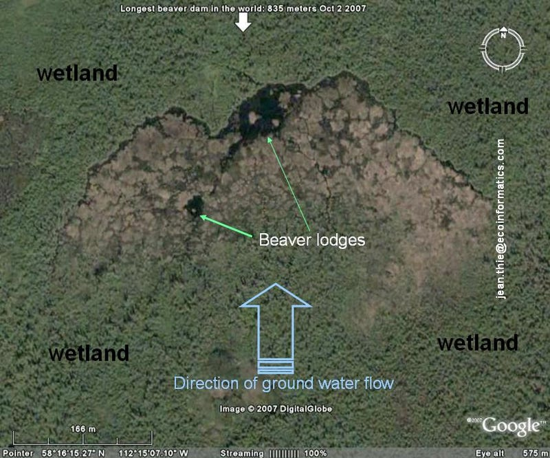 World's Biggest Beaver Dam Discovered In Canada