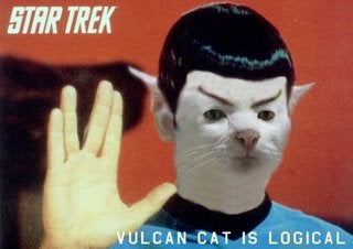 Meet The Spock Cat!