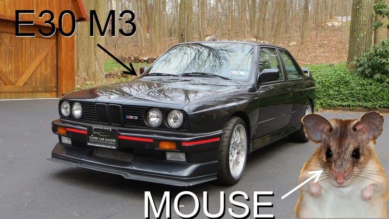 Call The Exterminator, I've Got An E30 M3 Problem!