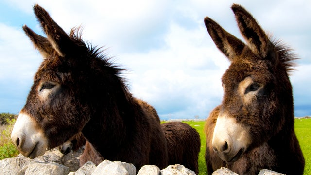 Donkey Semen Twins Offered Donkey-Free Porn Gig [UPDATE]