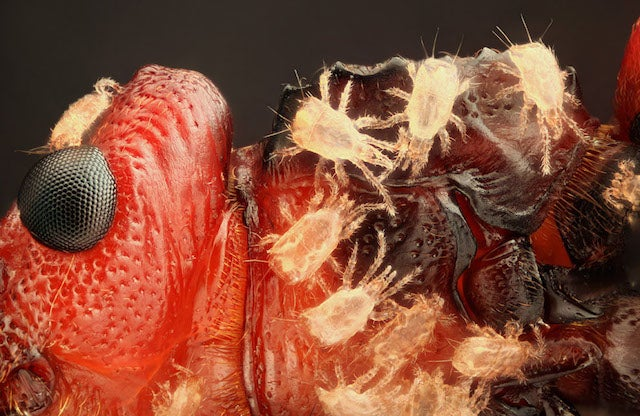 The creepiest photographs of things you can only see under a microscope