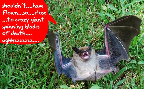 Wind Turbines Murdering Bats By Popping Their Lungs