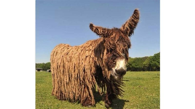 This Is Not a Piñata, This Is a Real Donkey