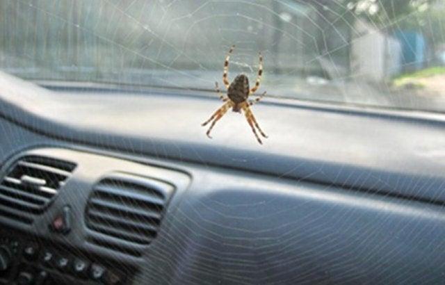 Spider webs inside my car