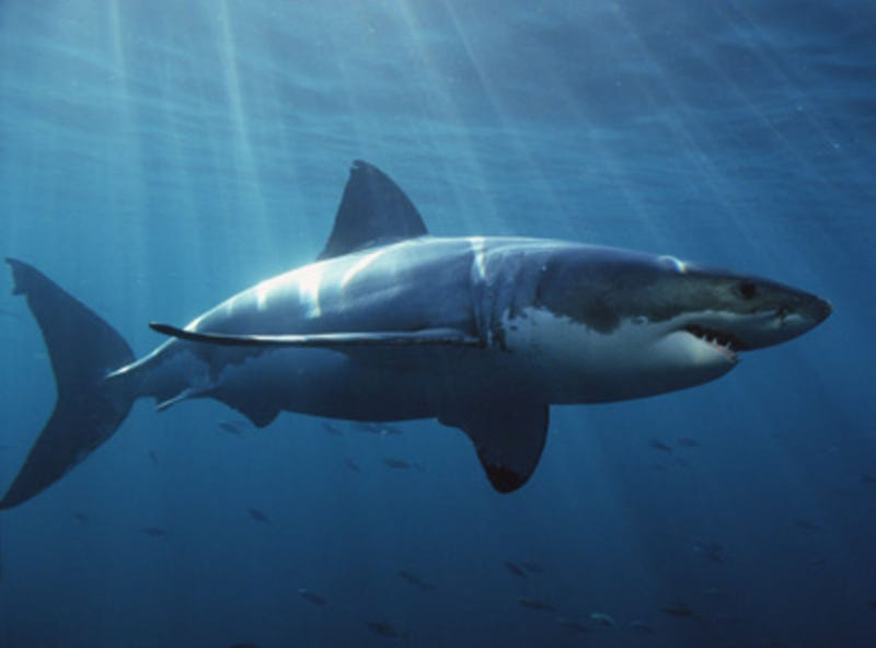An invisible force field that punches sharks in the face