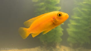 A Same-Day Delivery Startup Brought Me a Fish We Both Assumed Would Die