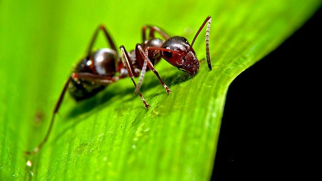 The Ant on a Rubber Rope Paradox