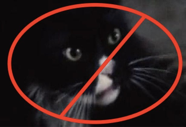 The Hunger Games Author Insisted the Cat Be Recast in Catching Fire