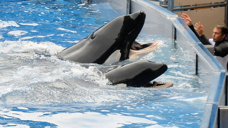 Blackfish Convinces Musical Acts to Cancel SeaWorld Performances