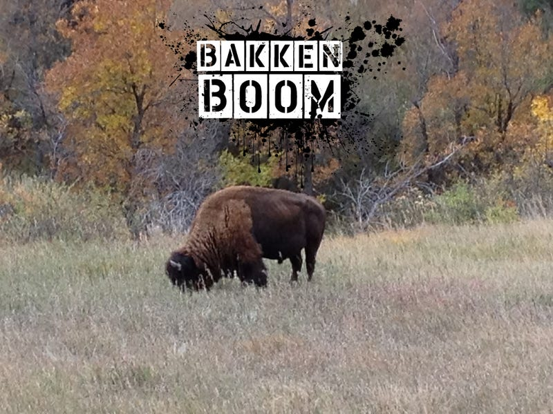 Bakken Boom: Where the Buffalo Are Furloughed