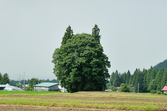 Oh My Goodness, These Trees Look Like Totoro