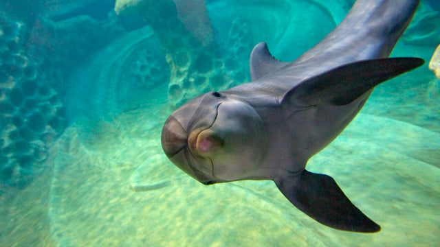 Dolphin's Smile Suggests It Really Is Better Down Where It's Wetter