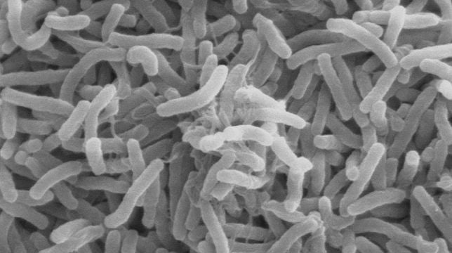 How cholera evolved to be one of the deadliest diseases in history