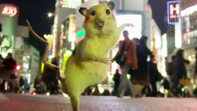 Artists Catch Rats and Turn Them Into Stuffed Pikachus