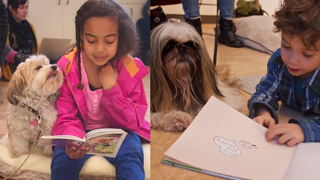 Dog Reading Reading With Dogs Program For