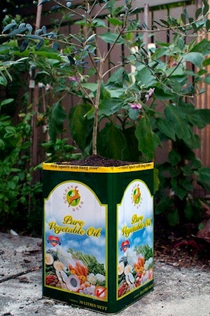 Make a Quick, Easy Garden Planter from an Empty Cooking Oil Can
