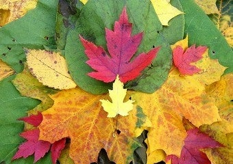 Fire Up Your Weed Whacker to Turn Fall Leaves into Mulch