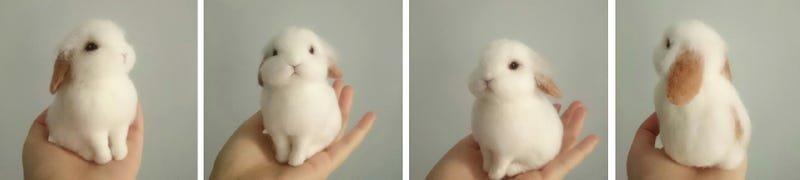 This Adorable Bunny is Fake