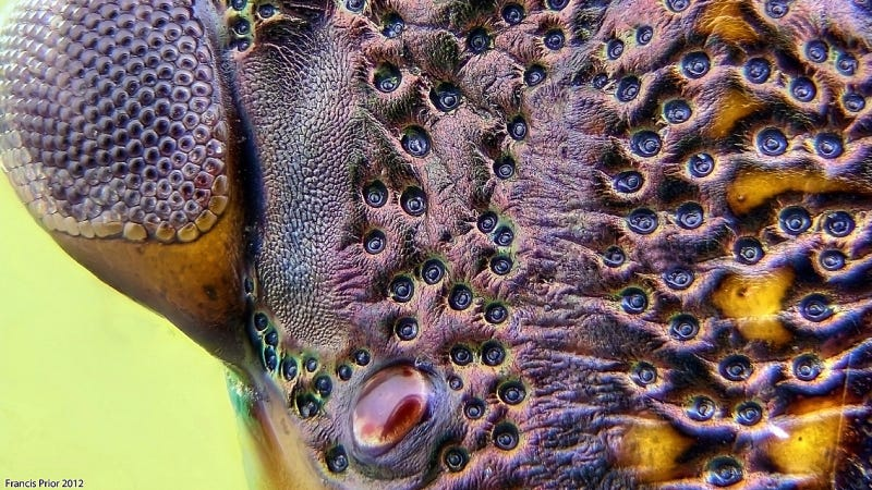 These Cthulhu-esque photos will change the way you look at stink bugs