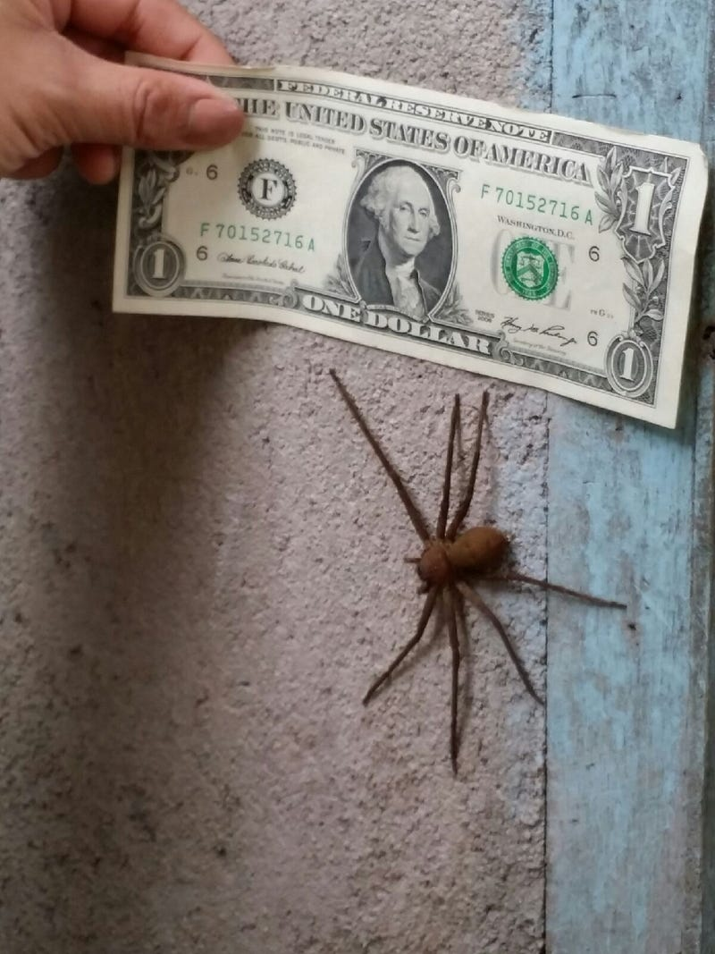 Just An Ordinary House Spider