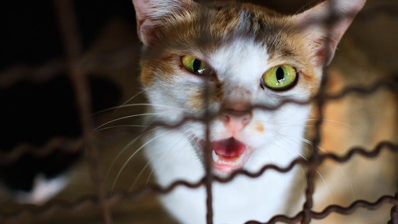 Cats Lock Woman Inside Her Own Damn Bedroom